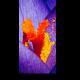 Яркие цвета крокуса