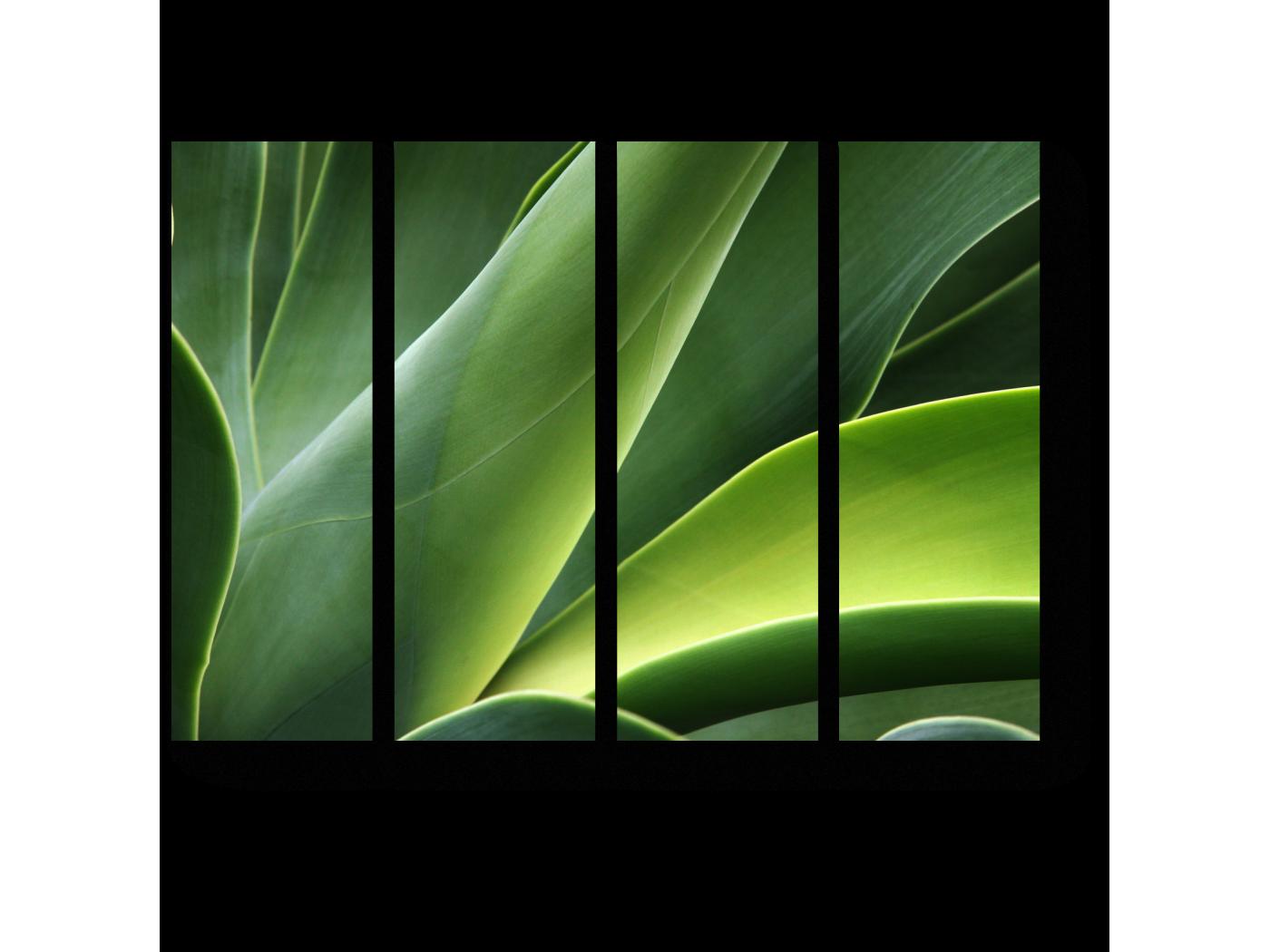Модульная картина Алоэ (60x45) фото
