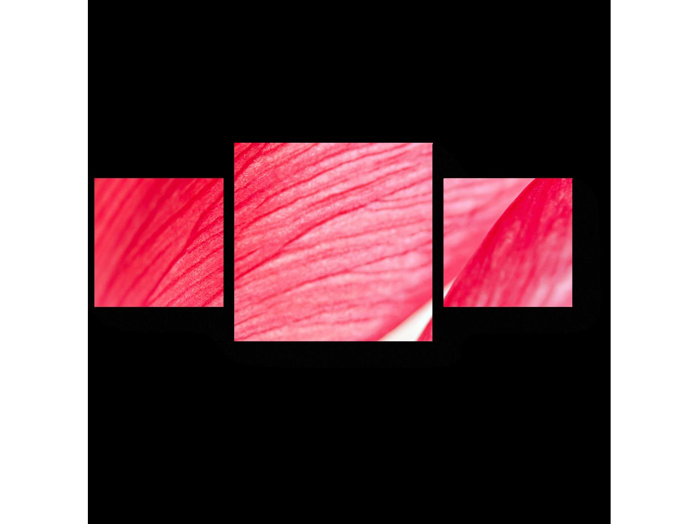 Модульная картина Аромат розы (70x30) фото