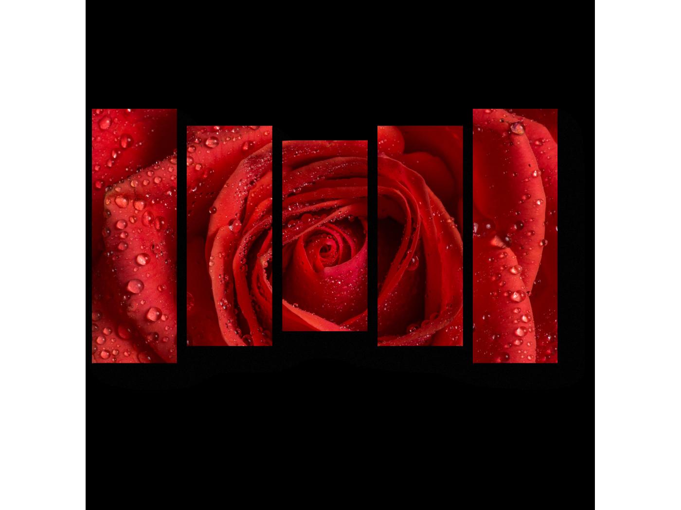 Модульная картина Алая роза (90x54) фото