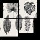 Гербарий из экзотических растений
