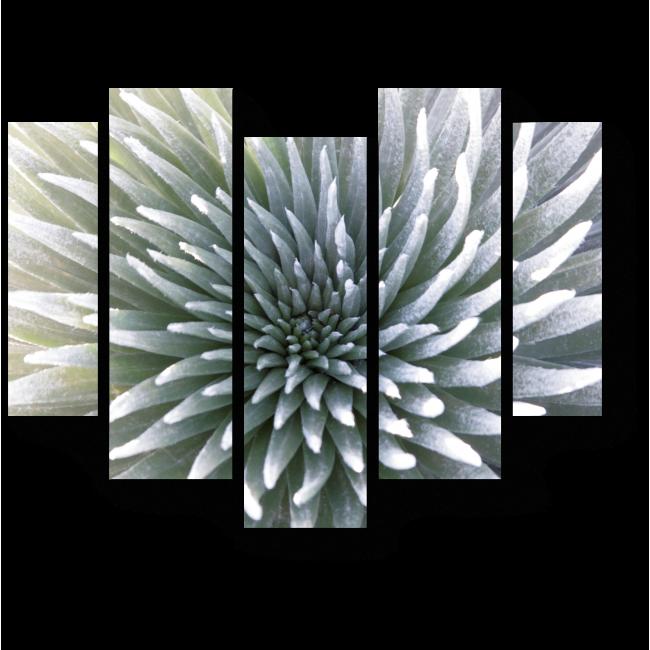 Модульная картина Гавайский цветок