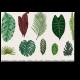 Винтажный гербарий