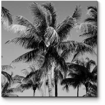 Жаркие тропики