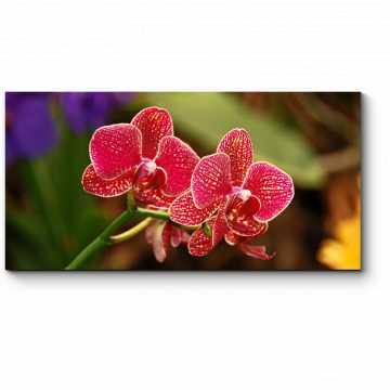 Модульная картина Невероятно красивая тропическая орхидея