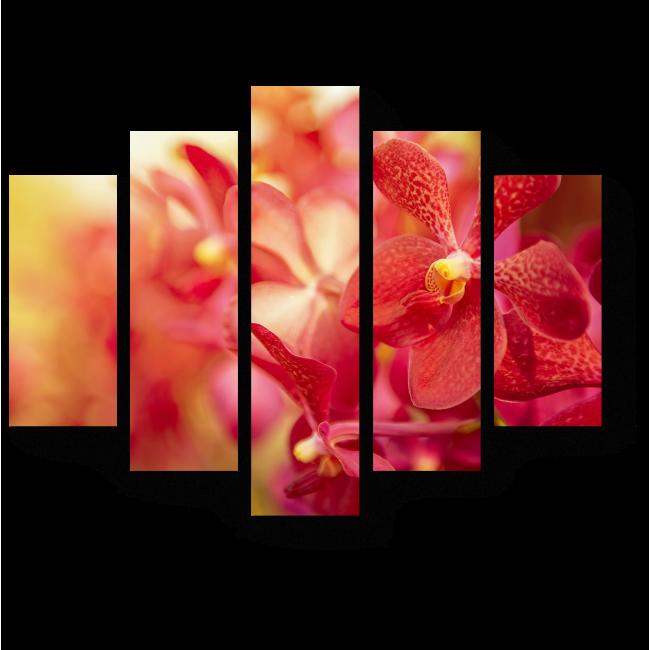 Модульная картина Чарующая орхидея в последних лучах солнца