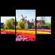 Тюльпановое поле, Амстердам