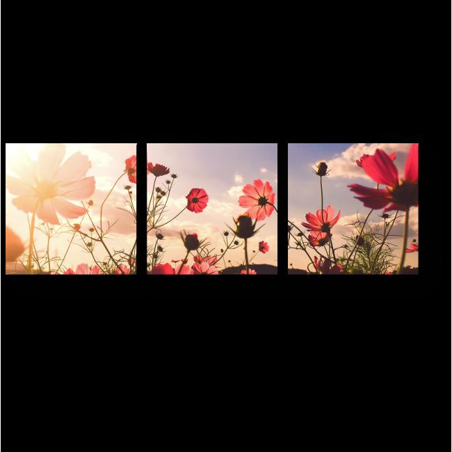 Модульная картина Маки в вечернем солнце