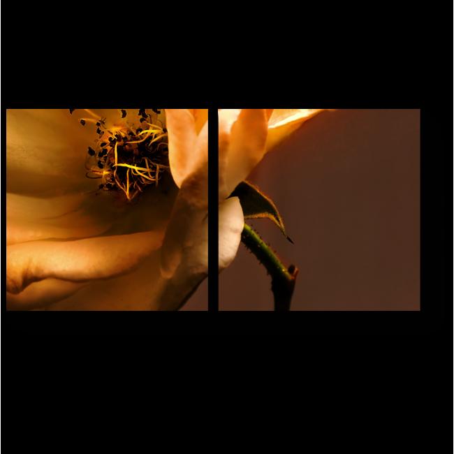 Модульная картина Бронзовая роза