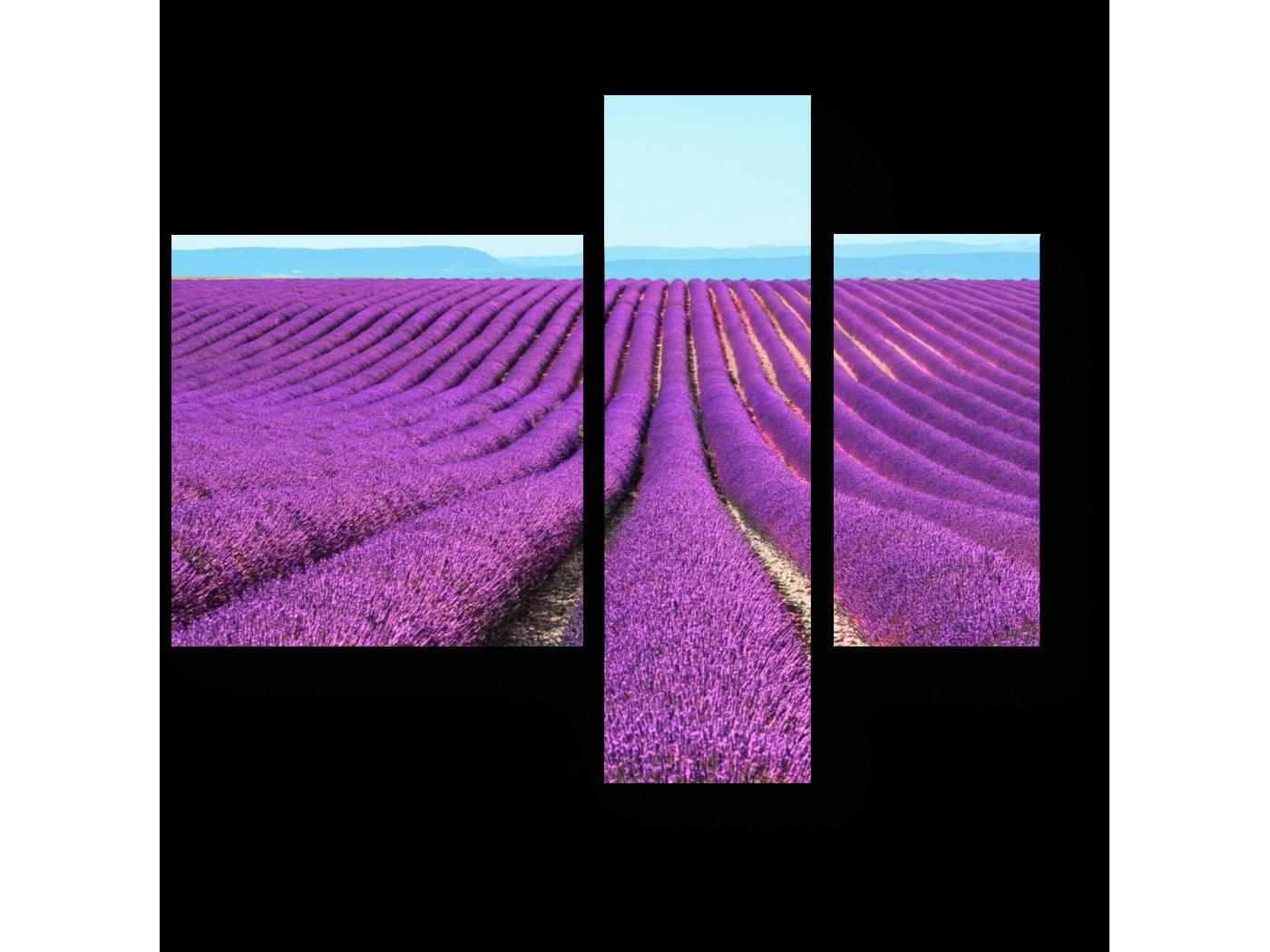 Модульная картина Поле лаванды (80x66) фото